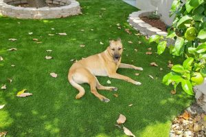 Artificial-Grass-Gardens-for-pet-owners