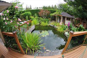 2 Essential Tips When Building a Garden Pond